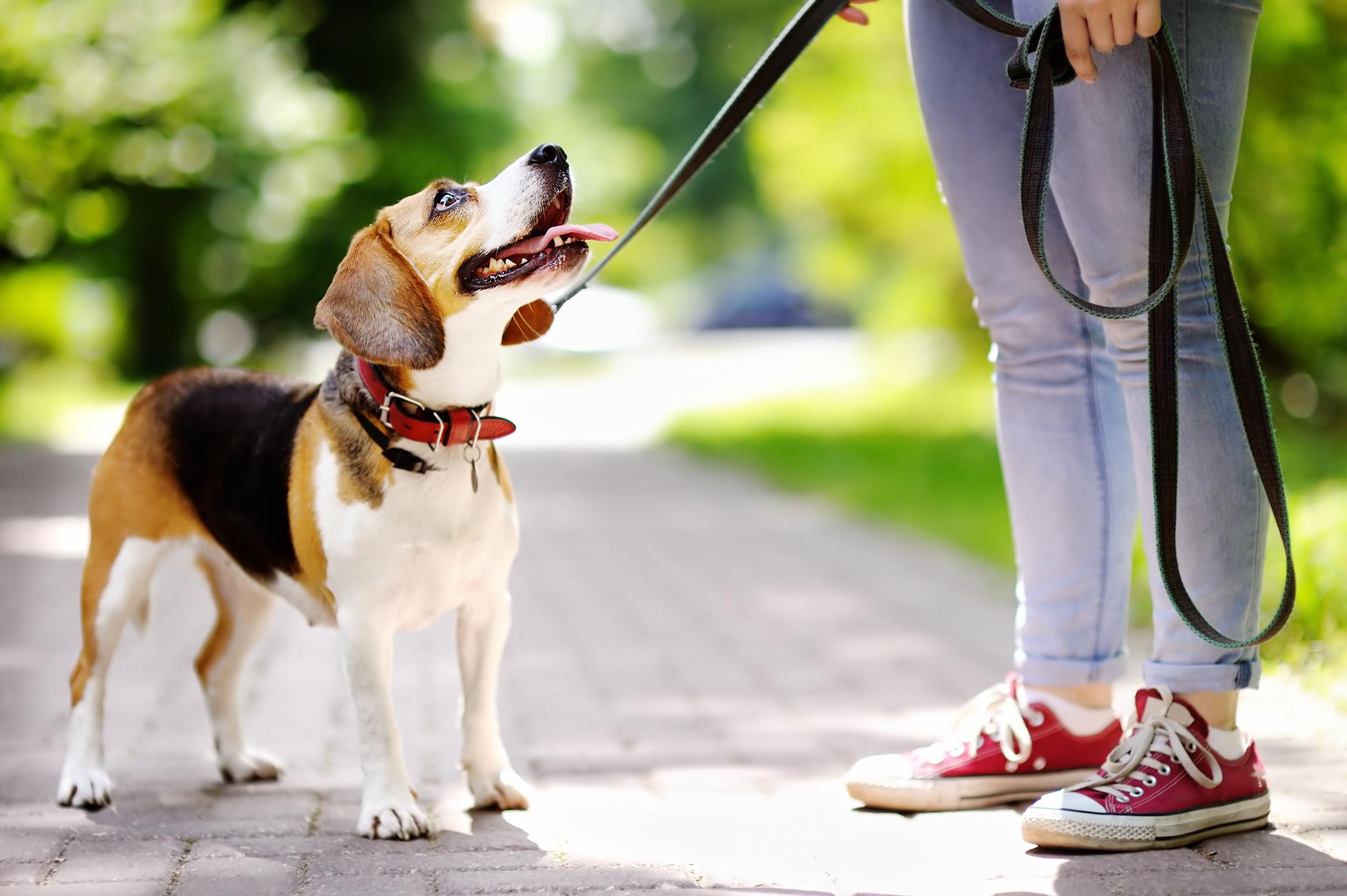 Aktiviteter med hund