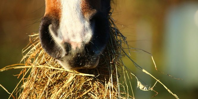 Vad bör hästar äta?