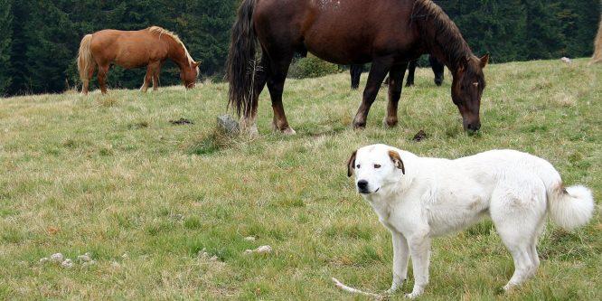 Är du hästmänniska eller hundmänniska?
